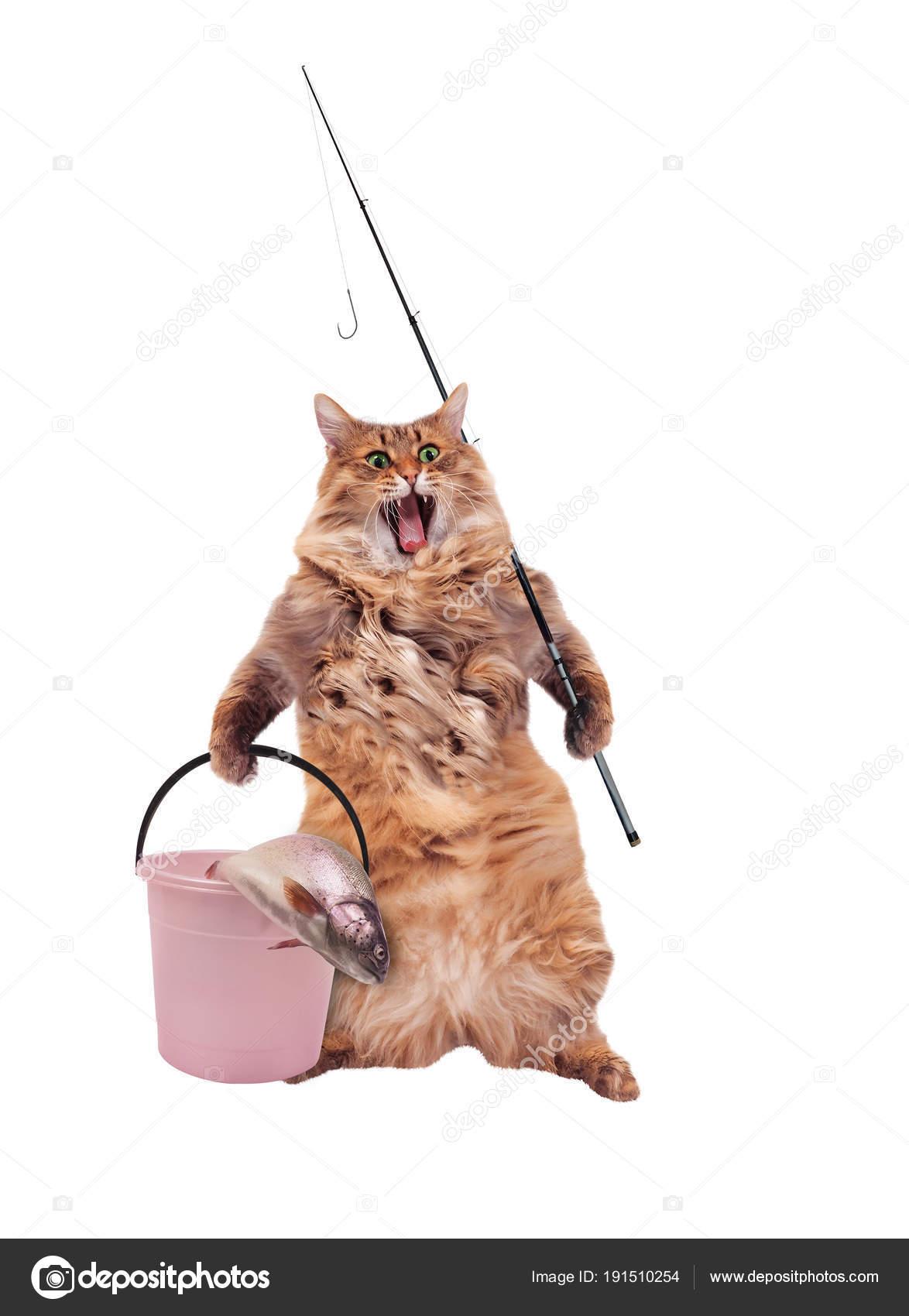 velká chlupatá kočička fotka ženy dělají anální sex