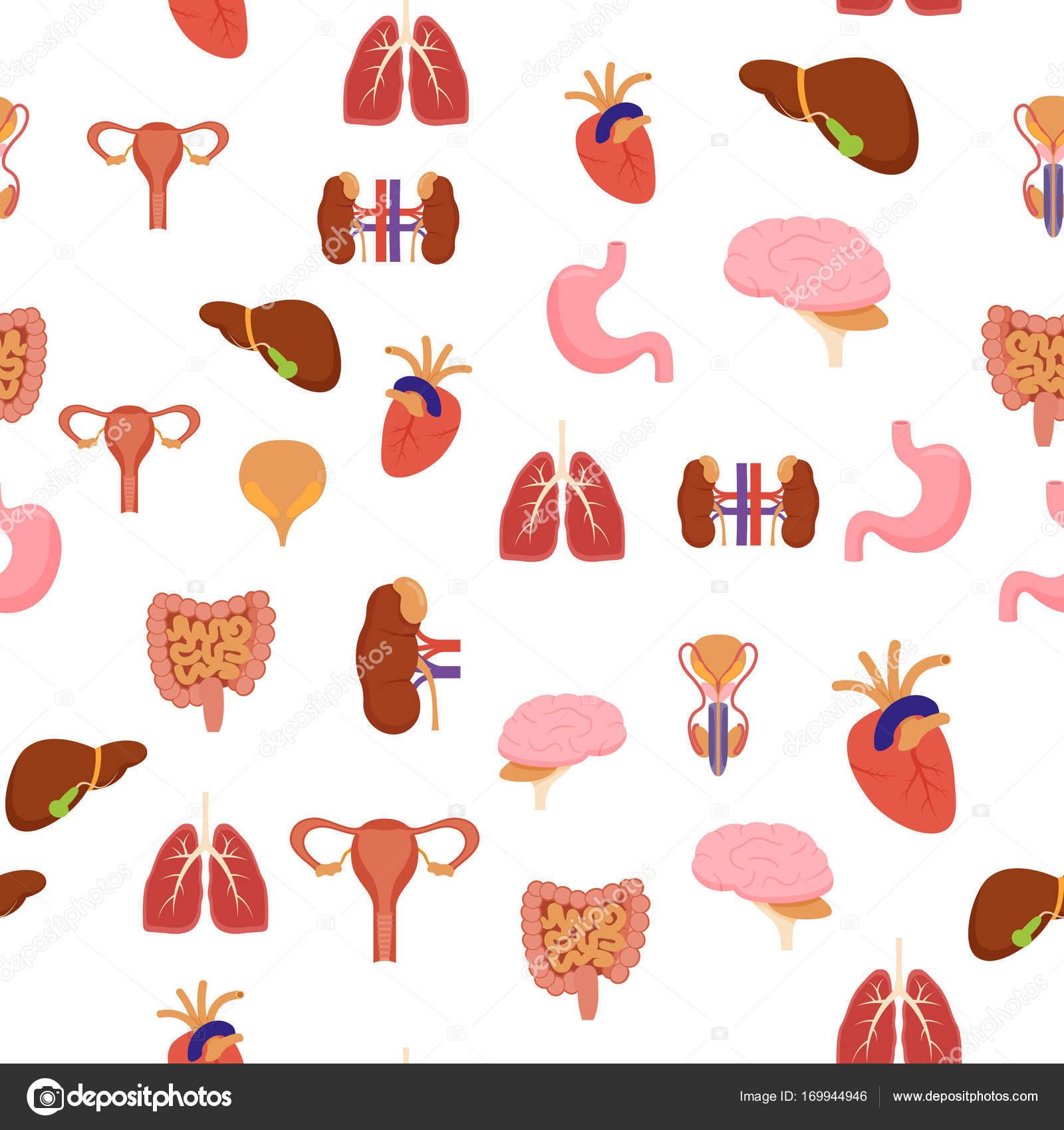 Patroon van de achtergrond van de interne organen van de cartoon op ...