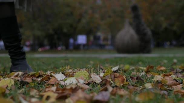 Podzimní móda. Ženské nohy v černé punčocháče a stylový módní boty boty, venkovní zlaté listy