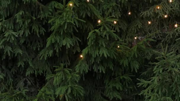 Christmas tree with a garland and lights