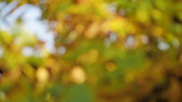 yellow oak leaves in autumn Park.blurred out of focus