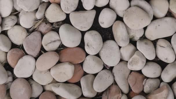 na zemi leží bílé mořské kameny. textura v podobě hladkých bílých kamenů na pláži