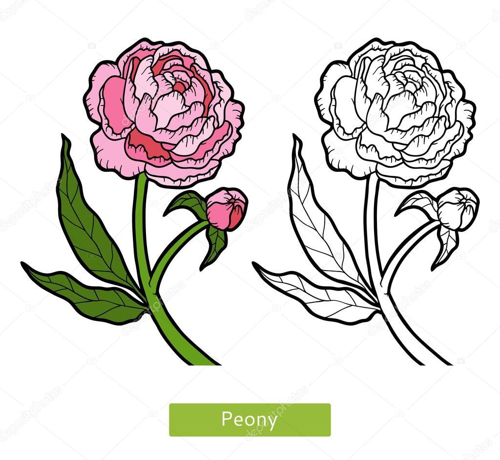 coloring book flower peony stock vector ksenya savva 128784414 rh depositphotos com pony vector peony vector free