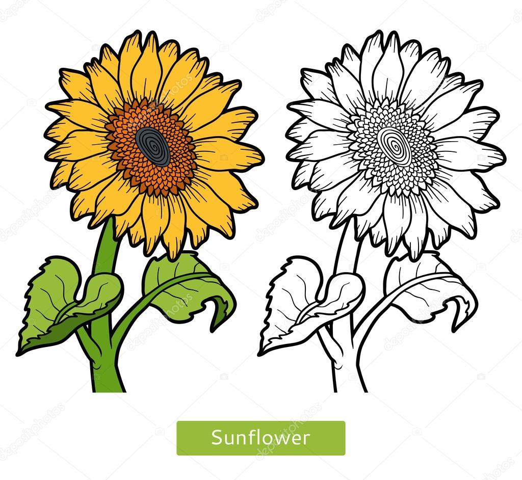 Boyama Kitabı çiçek Ayçiçeği Stok Vektör Ksenyasavva 128784860