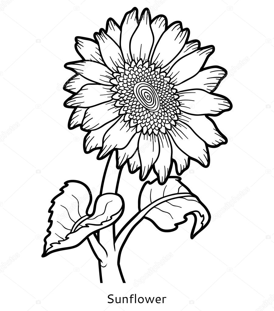 Coloring book flower sunflower stock vector ksenya for Coloring pages of sunflowers