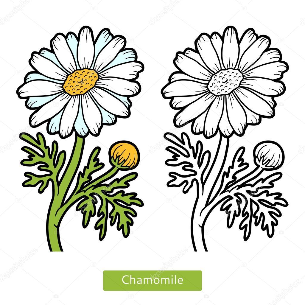 Boyama Kitabı çiçek Papatya Stok Vektör Ksenyasavva 128786058