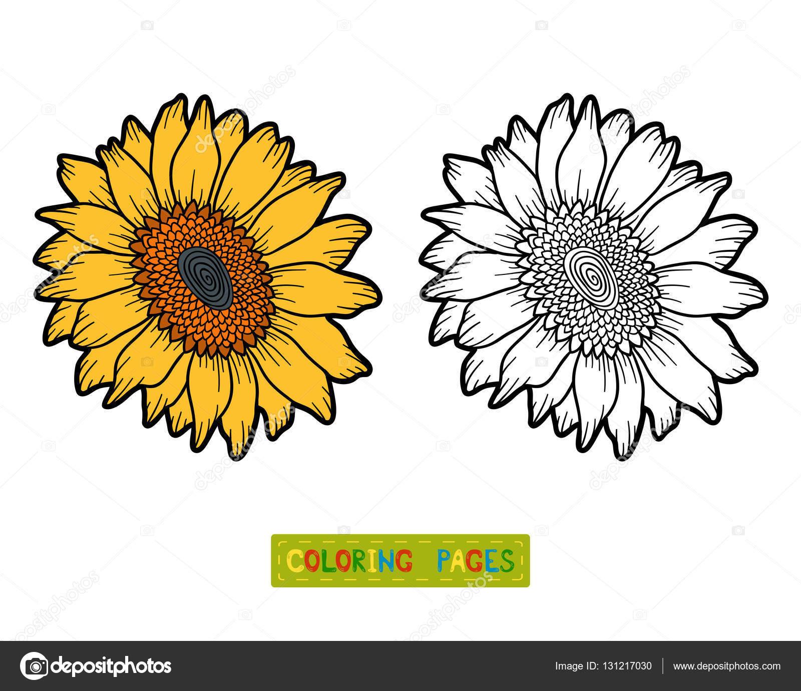 Imágenes Girasoles Para Colorear Libro Para Colorear Flor