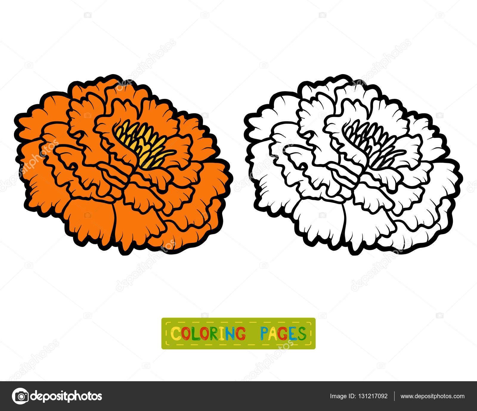 Coloriage Fleur Doranger.Livre De Coloriage Fleur Marigold Image Vectorielle Ksenya Savva