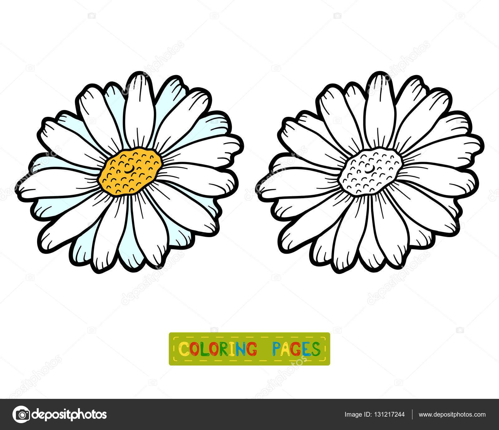 Boyama Kitabı çiçek Papatya Stok Vektör Ksenyasavva 131217244