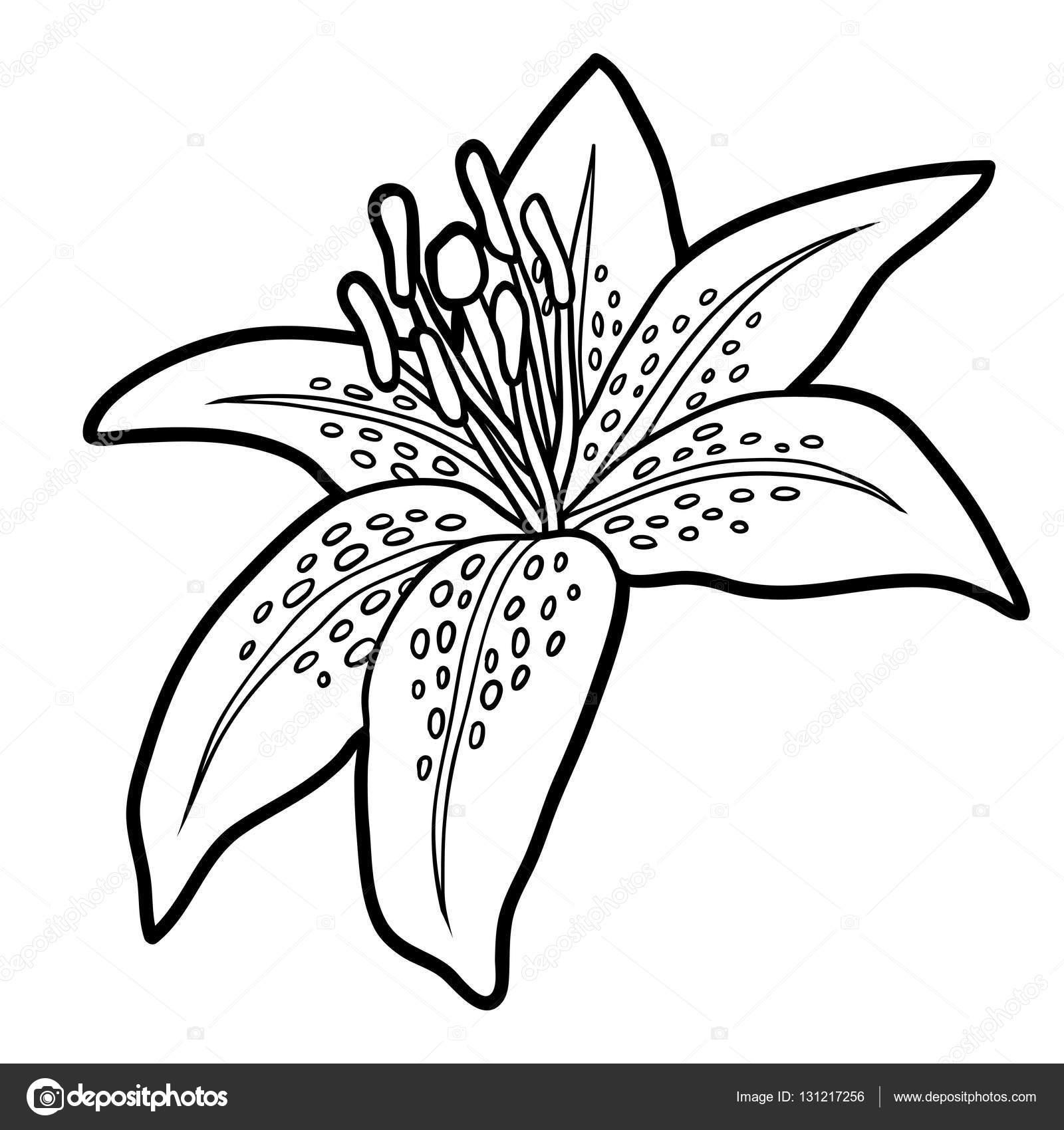 Libro Para Colorear Flor De Lirio Archivo Imágenes Vectoriales