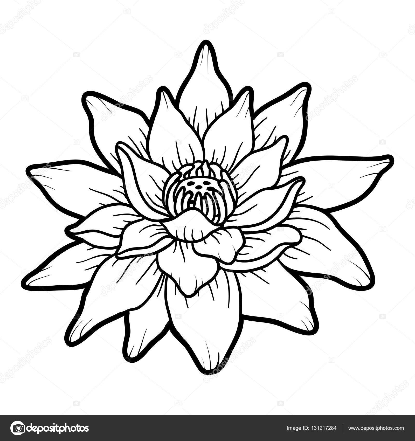 Livre De Coloriage Fleur De Lotus Image Vectorielle