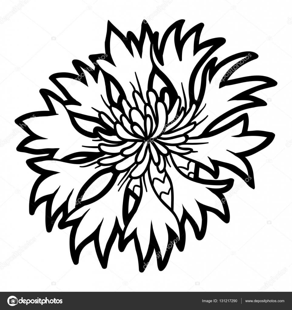 Картинки цветов для раскраски василек