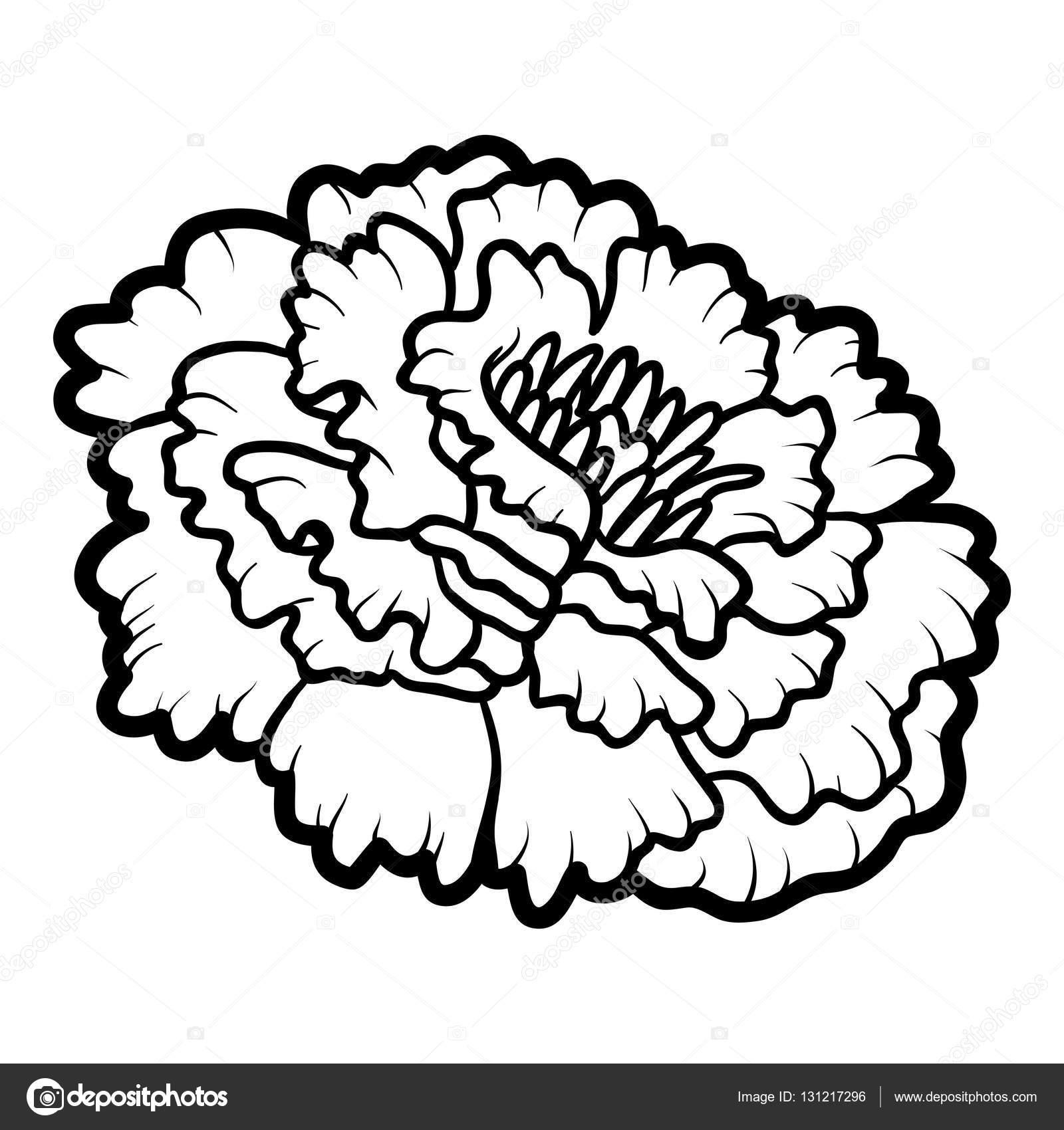 coloring book flower marigold stock vector ksenya savva 131217296