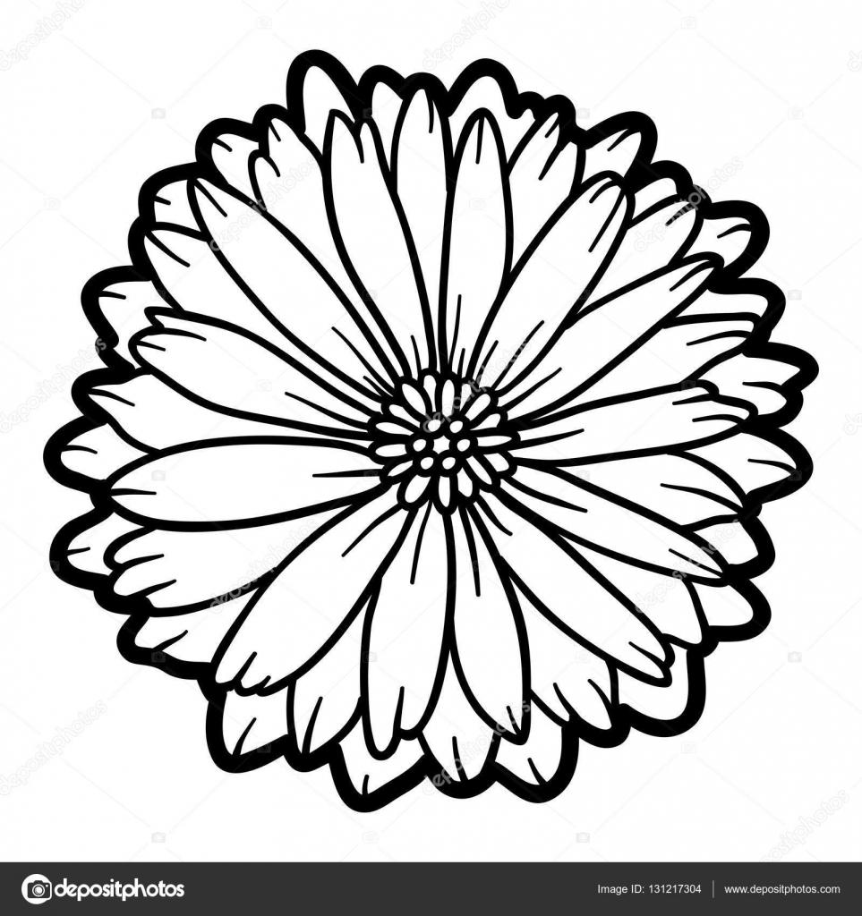Coloriage Fleur.Livre De Coloriage Fleur De Calendula Image Vectorielle