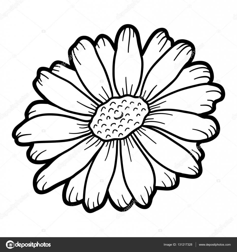 Libro para colorear, flor manzanilla — Archivo Imágenes Vectoriales ...
