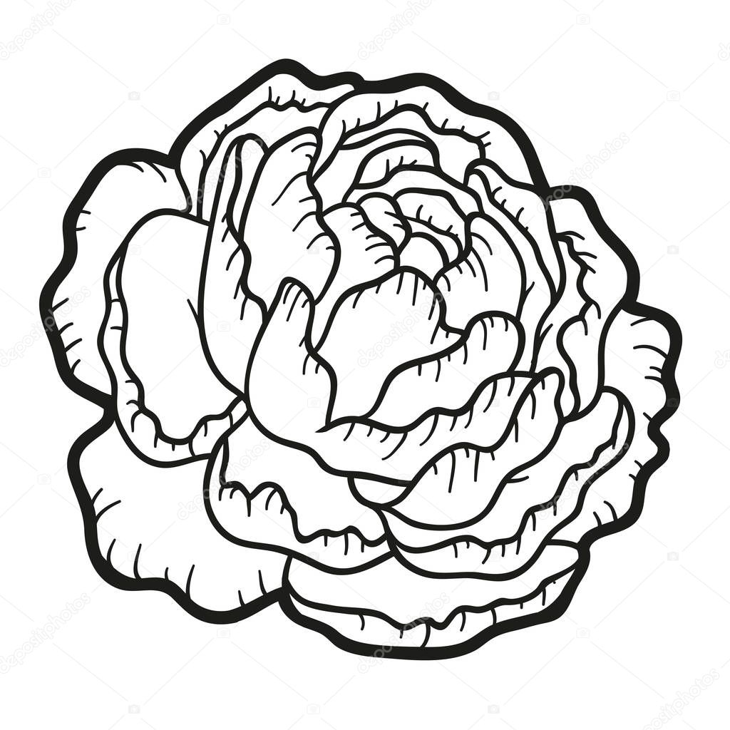 Coloring book, flower Peony