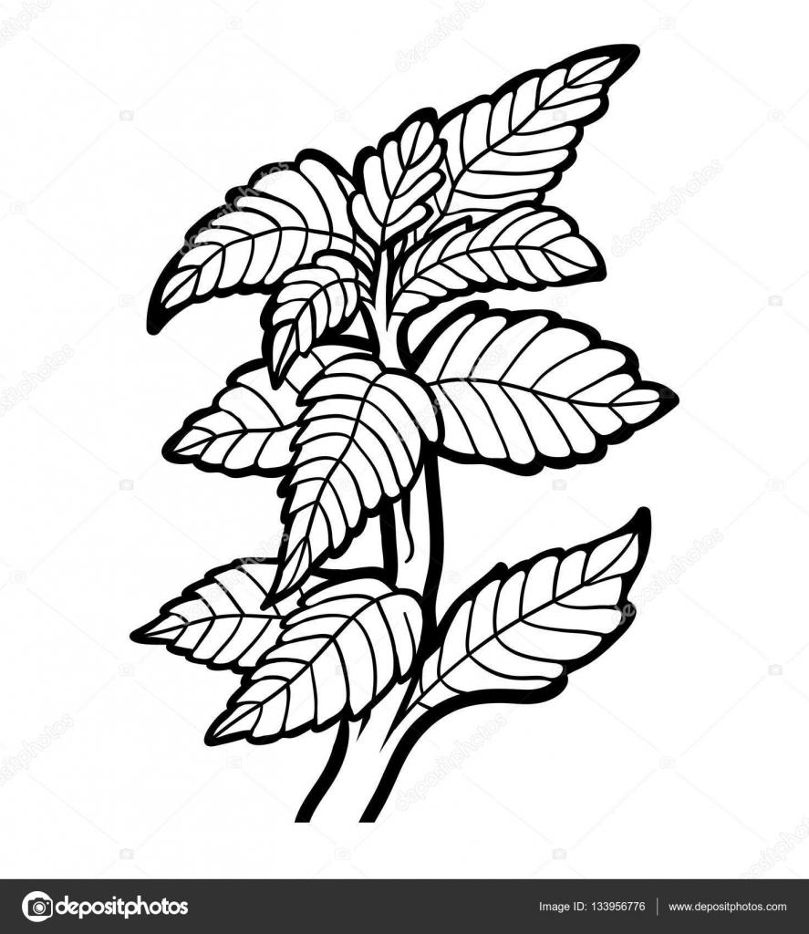 Libro para colorear, planta, casa de la moneda — Vector de stock ...
