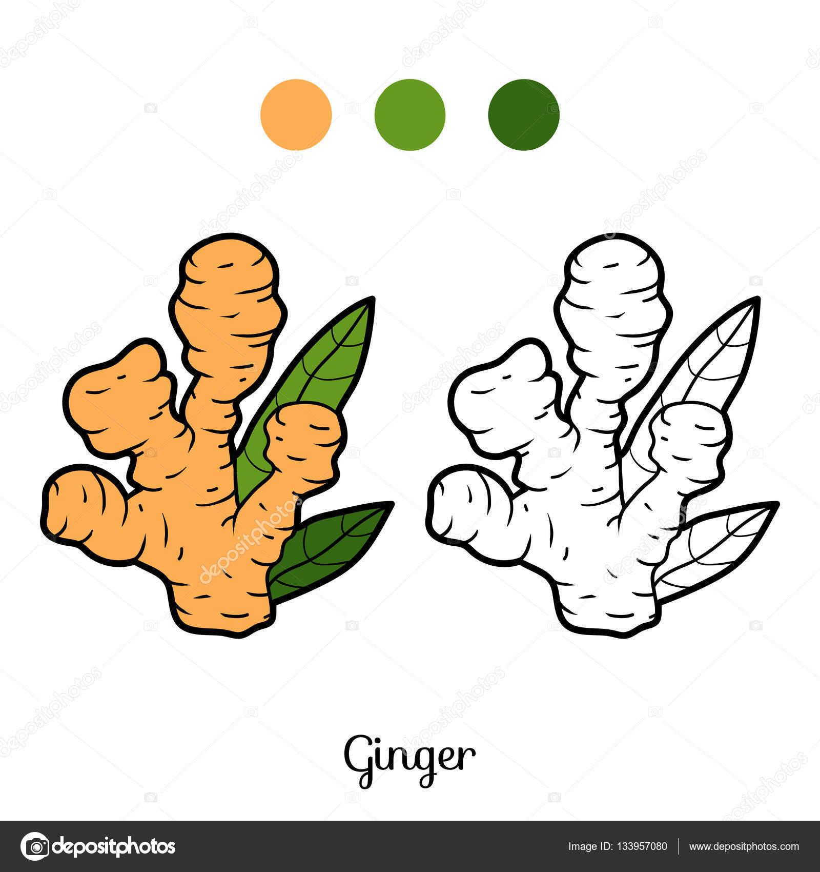 Libro para colorear, planta de jengibre — Vector de stock ...