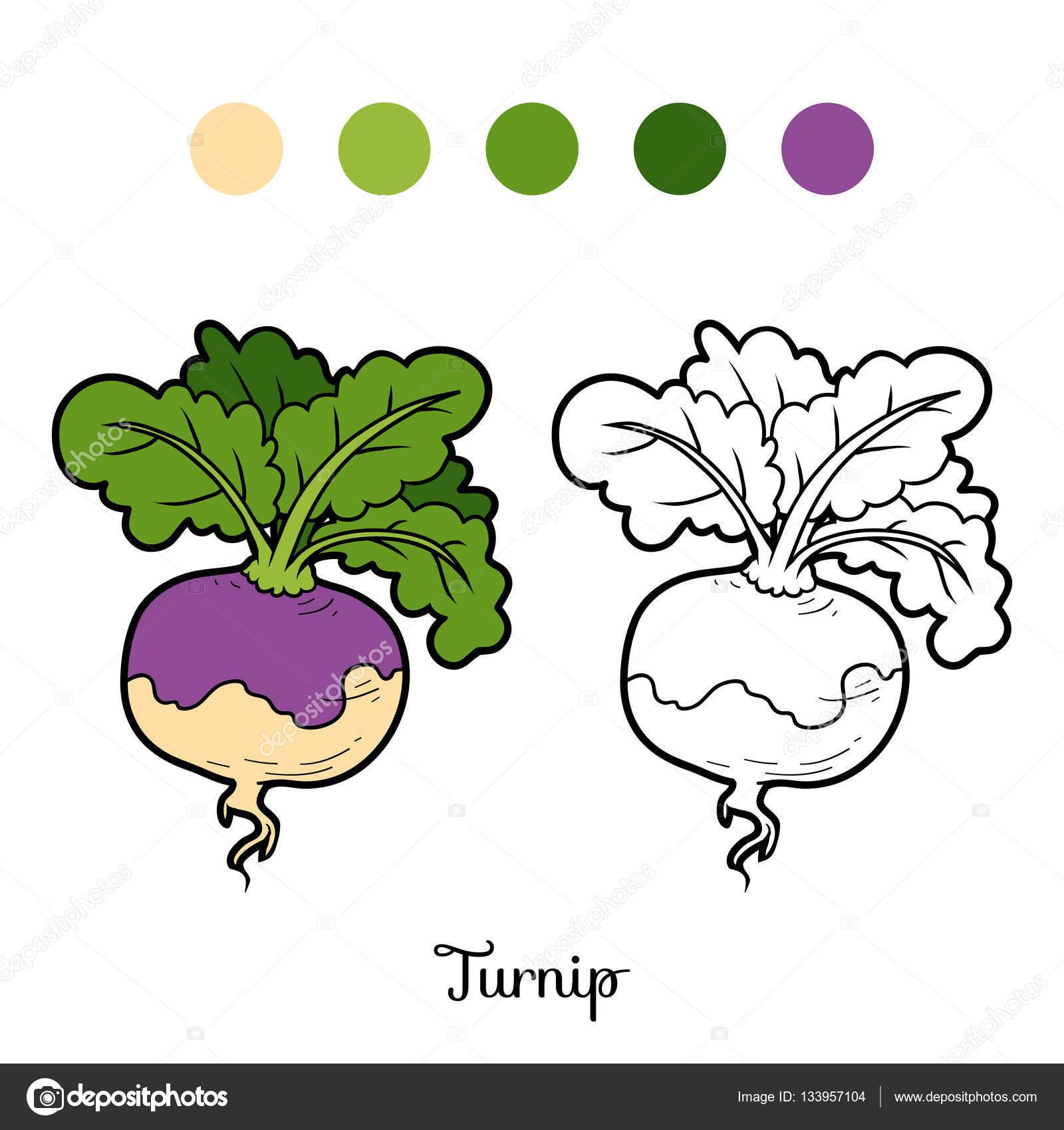 Malbuch, Gemüse, Rübe — Stockvektor © ksenya_savva #133957104