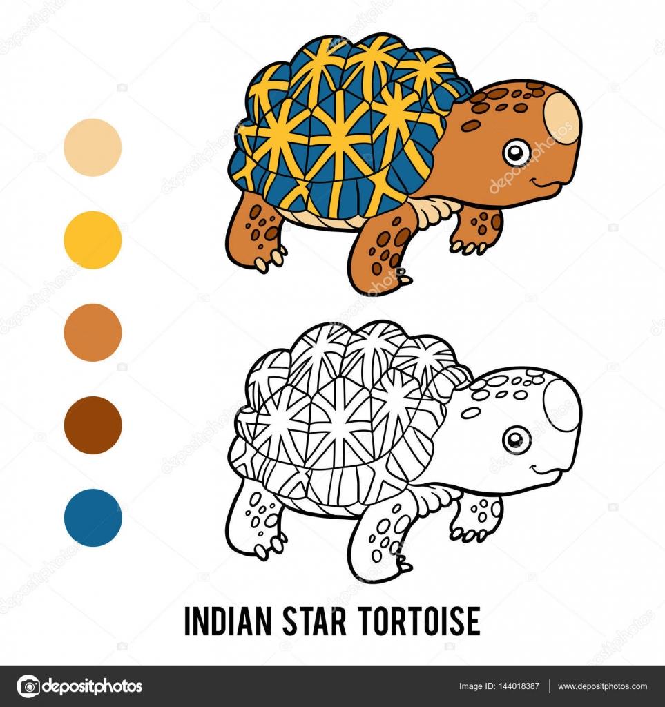 Libro de colorear, tortuga India de la estrella — Vector de stock ...
