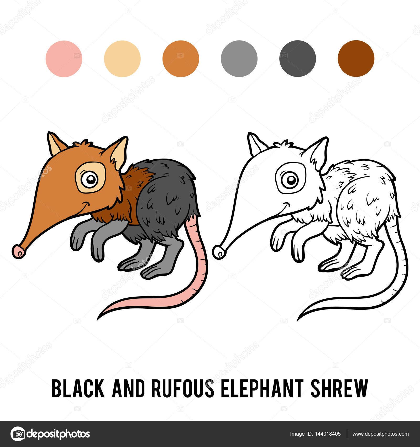 Colorear libro negro y Rufo musaraña elefante — Vector de stock ...