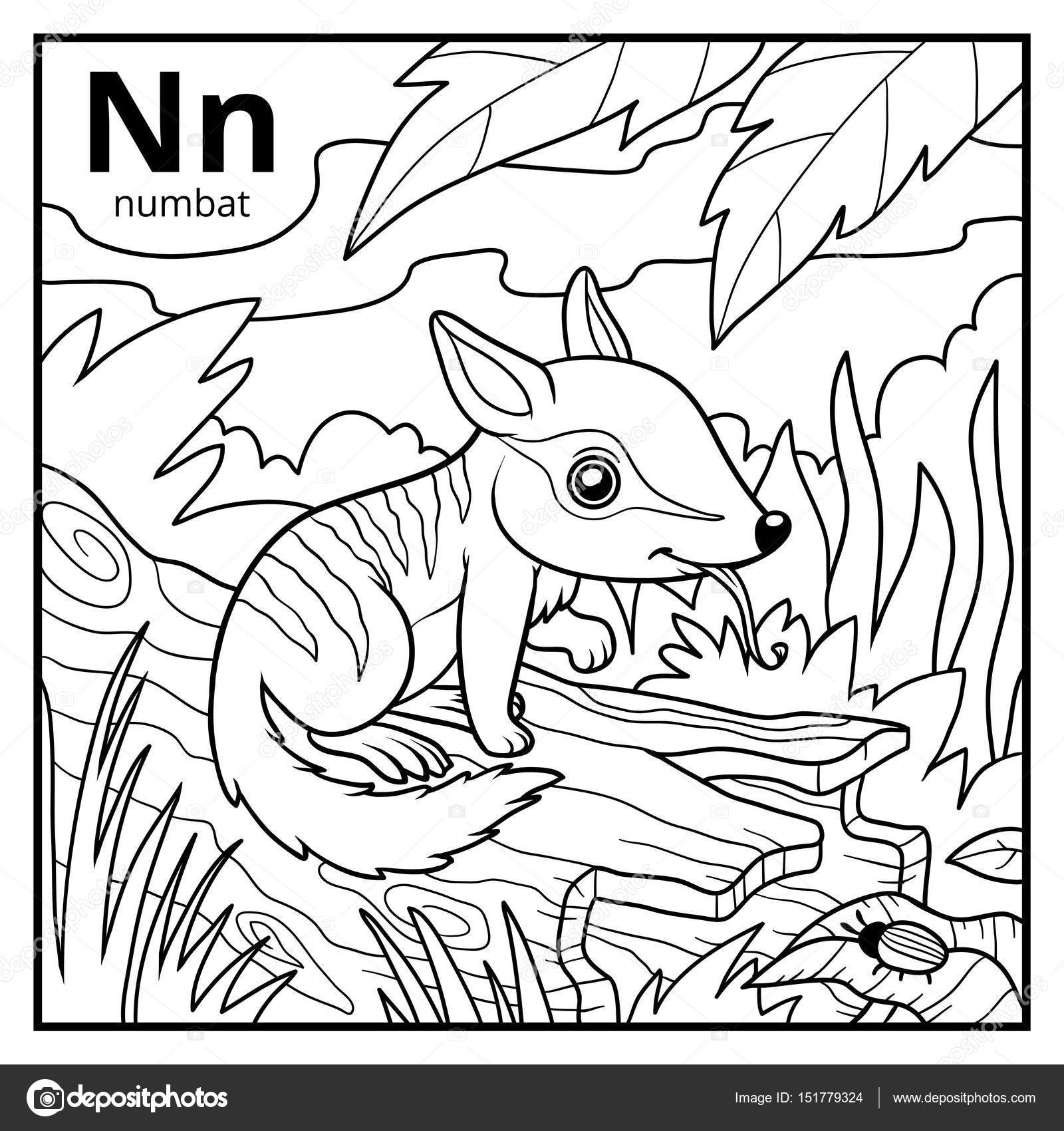 Coloring book colorless alphabet Letter N numbat Stock Vector