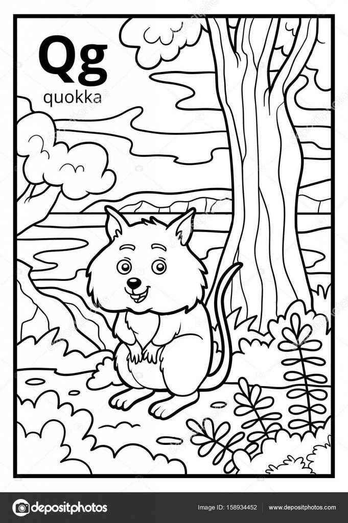 Libro para colorear, alfabeto descolorido. Letra Q, quokka — Vector ...