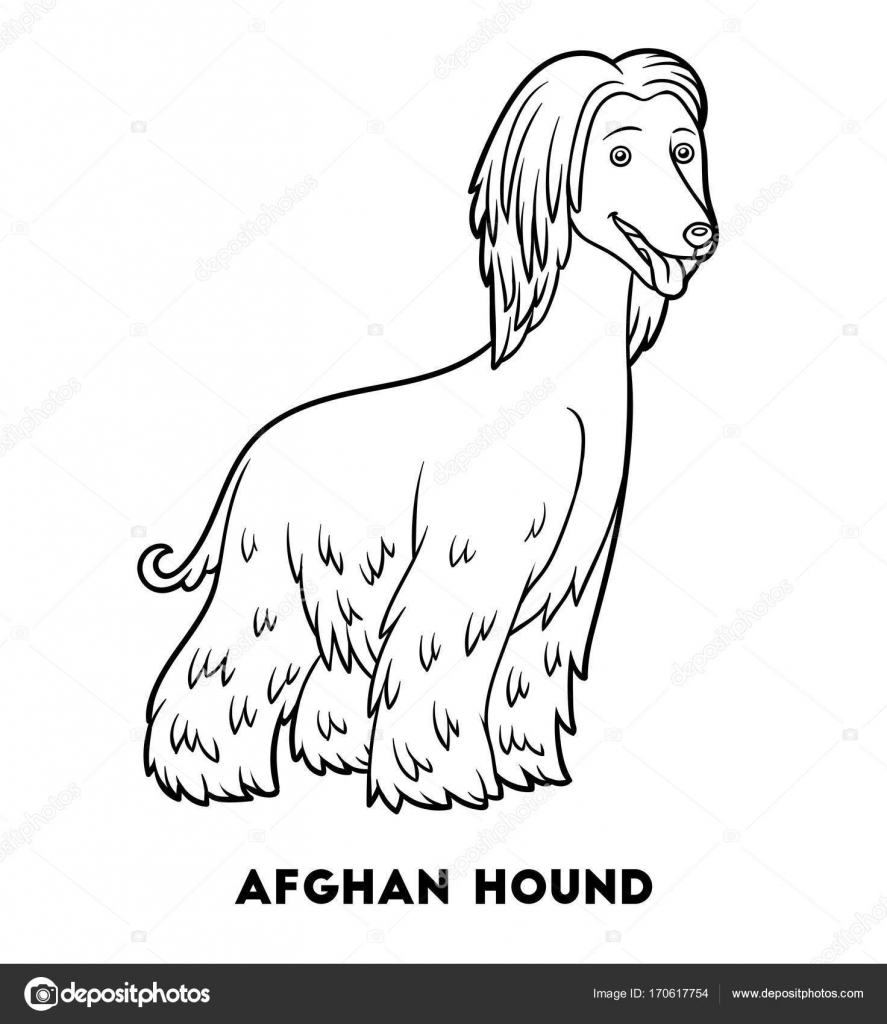 Coloring book, Dog breeds: Afghan hound — Stock Vector ...