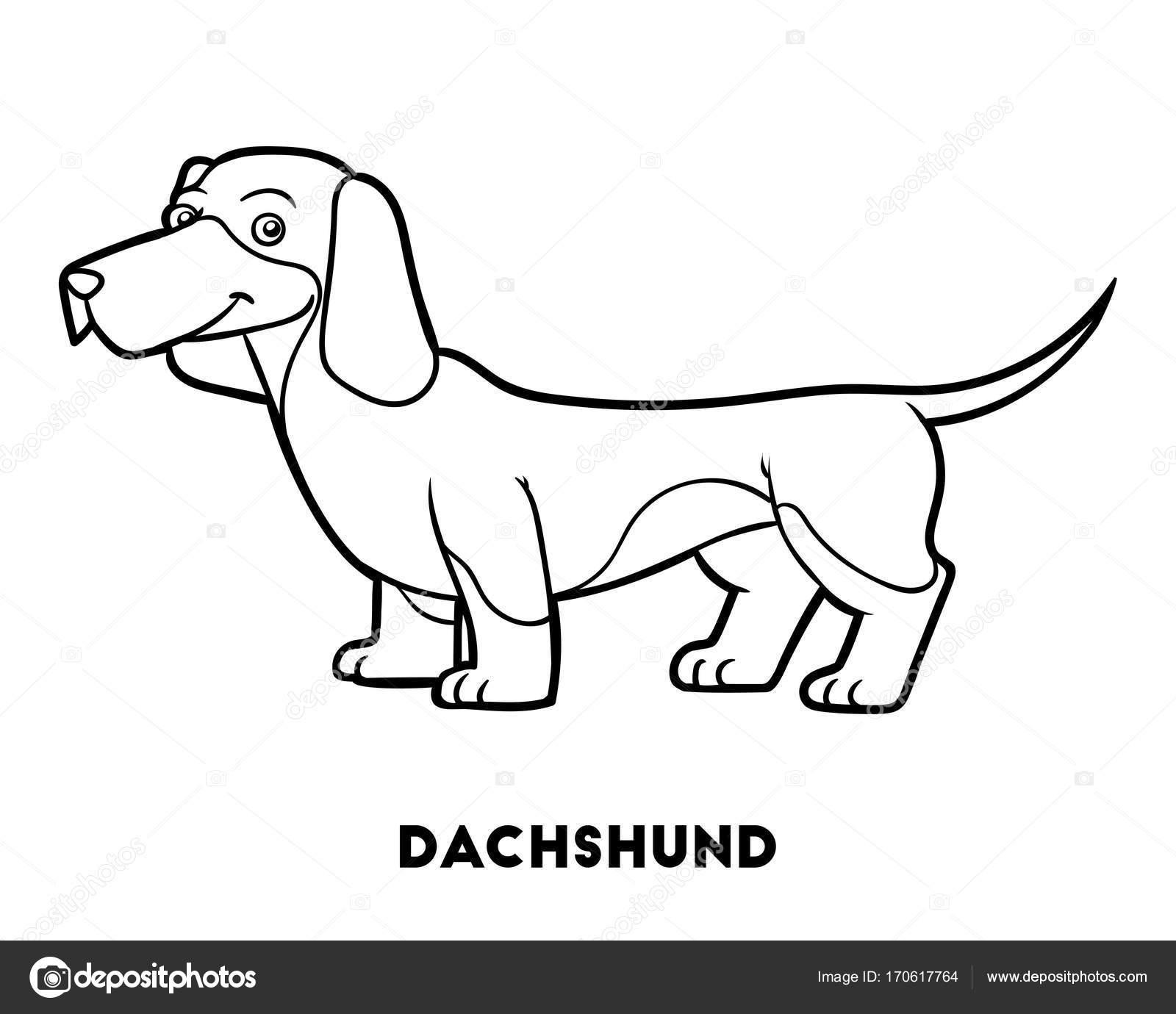 Libro para colorear, perro razas: Dachshund — Archivo Imágenes ...