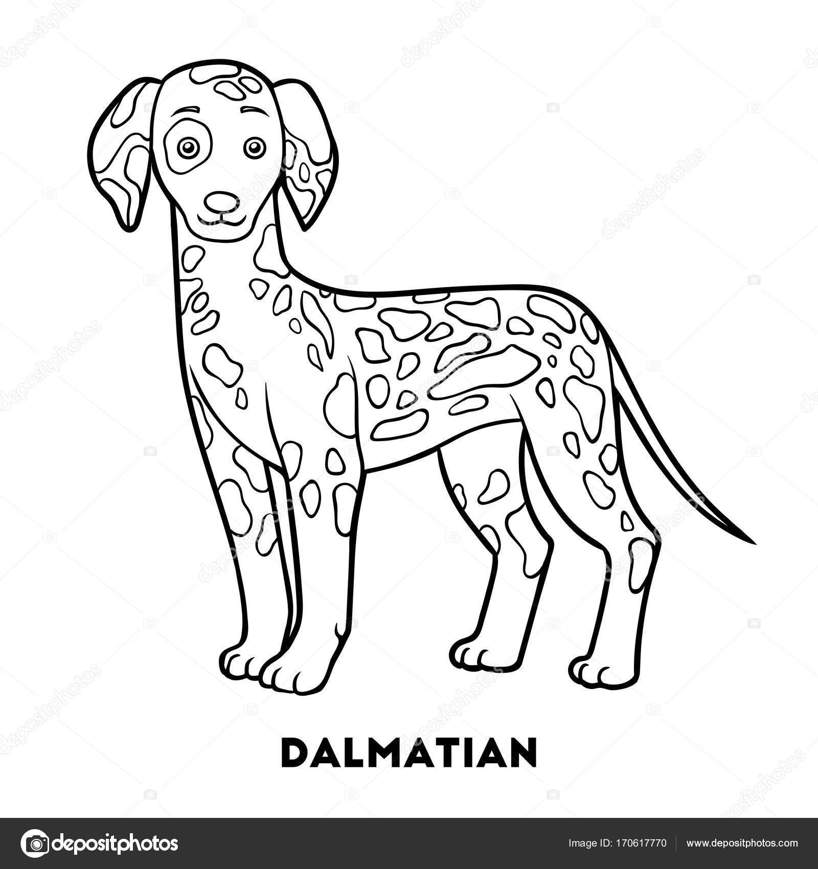 Libro de colorear, razas de perro: dálmata — Vector de stock ...