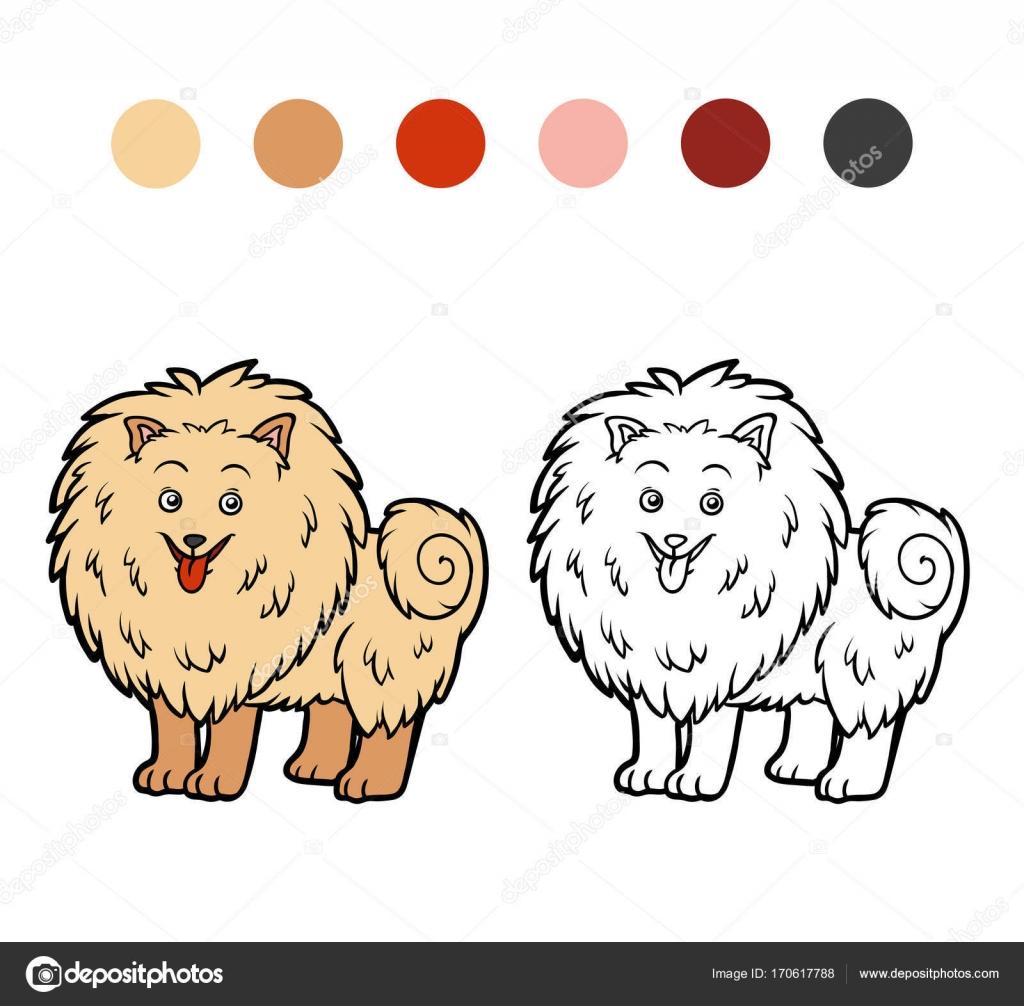 Libro de colorear, razas de perros: Pomerania — Vector de stock ...