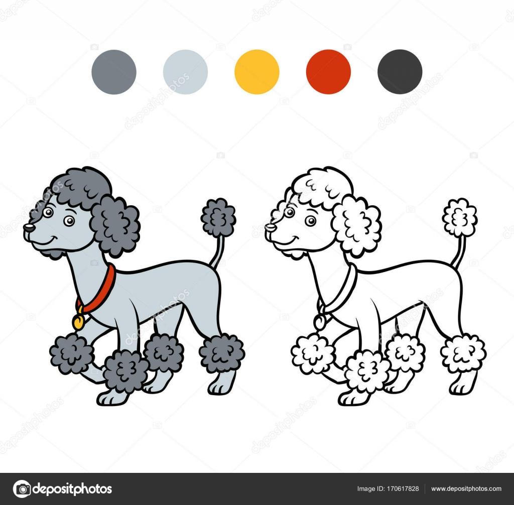 Libro de colorear, razas de perro: Caniche — Vector de stock ...