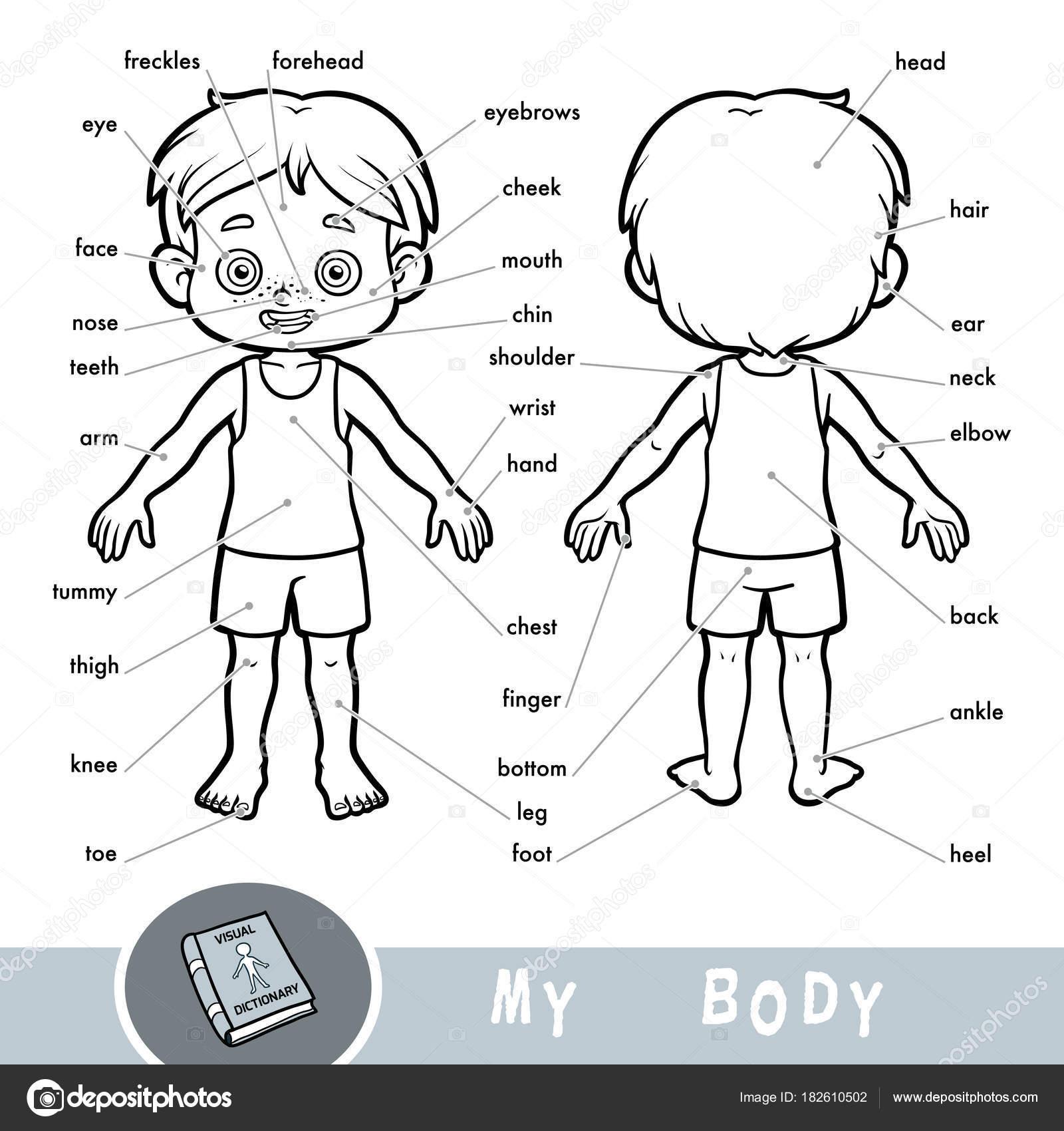 Diccionario visual para niños sobre el cuerpo humano. Mis partes del ...