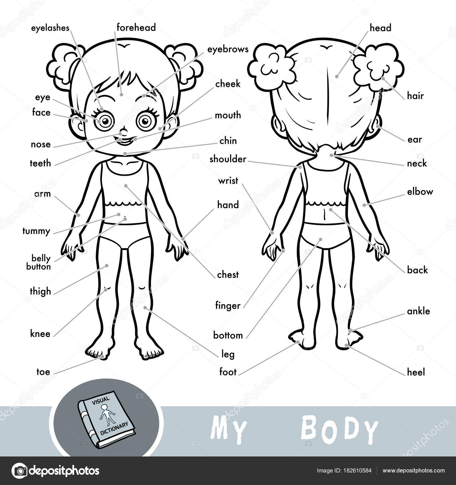 Visual Dictionary For Children About The Human Body My Body