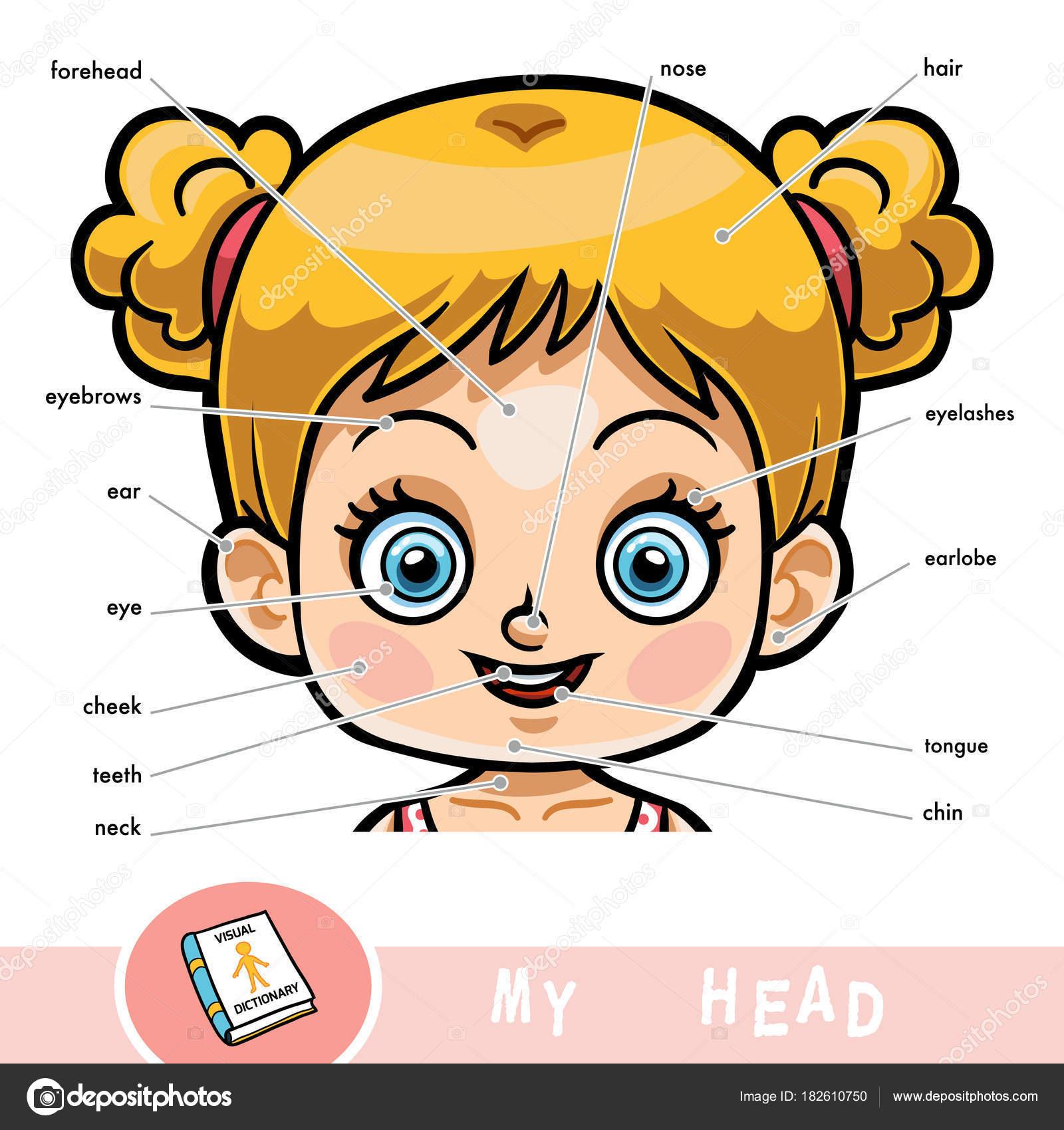 Diccionario visual para niños sobre el cuerpo humano. Mis piezas de ...
