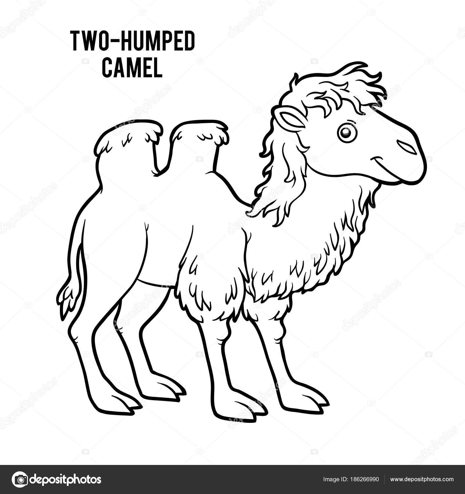Libro de colorear, camello de dos jorobas — Archivo Imágenes ...