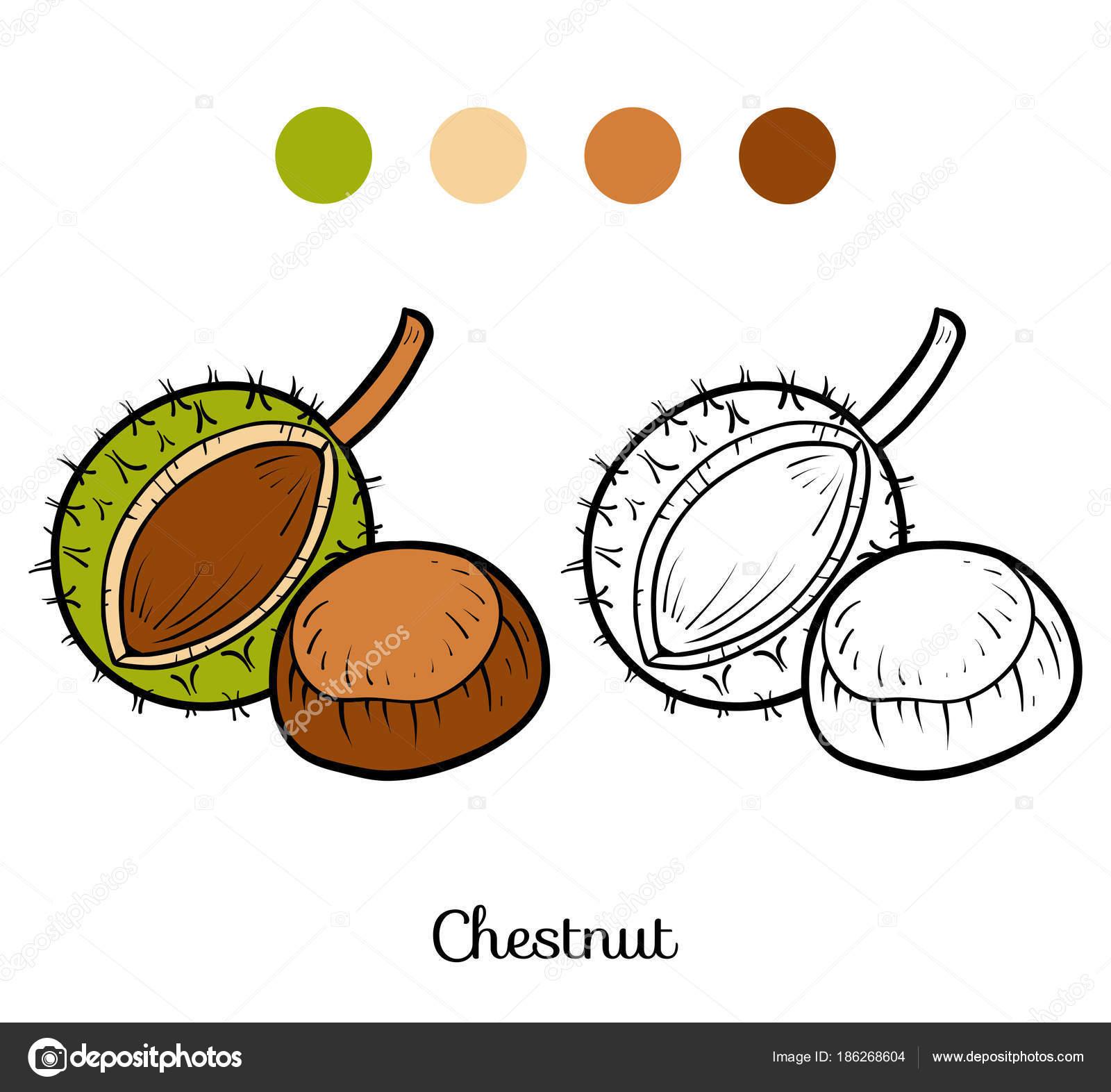Coloriage Marron Fruit.Livre De Coloriage Chataigne Image Vectorielle