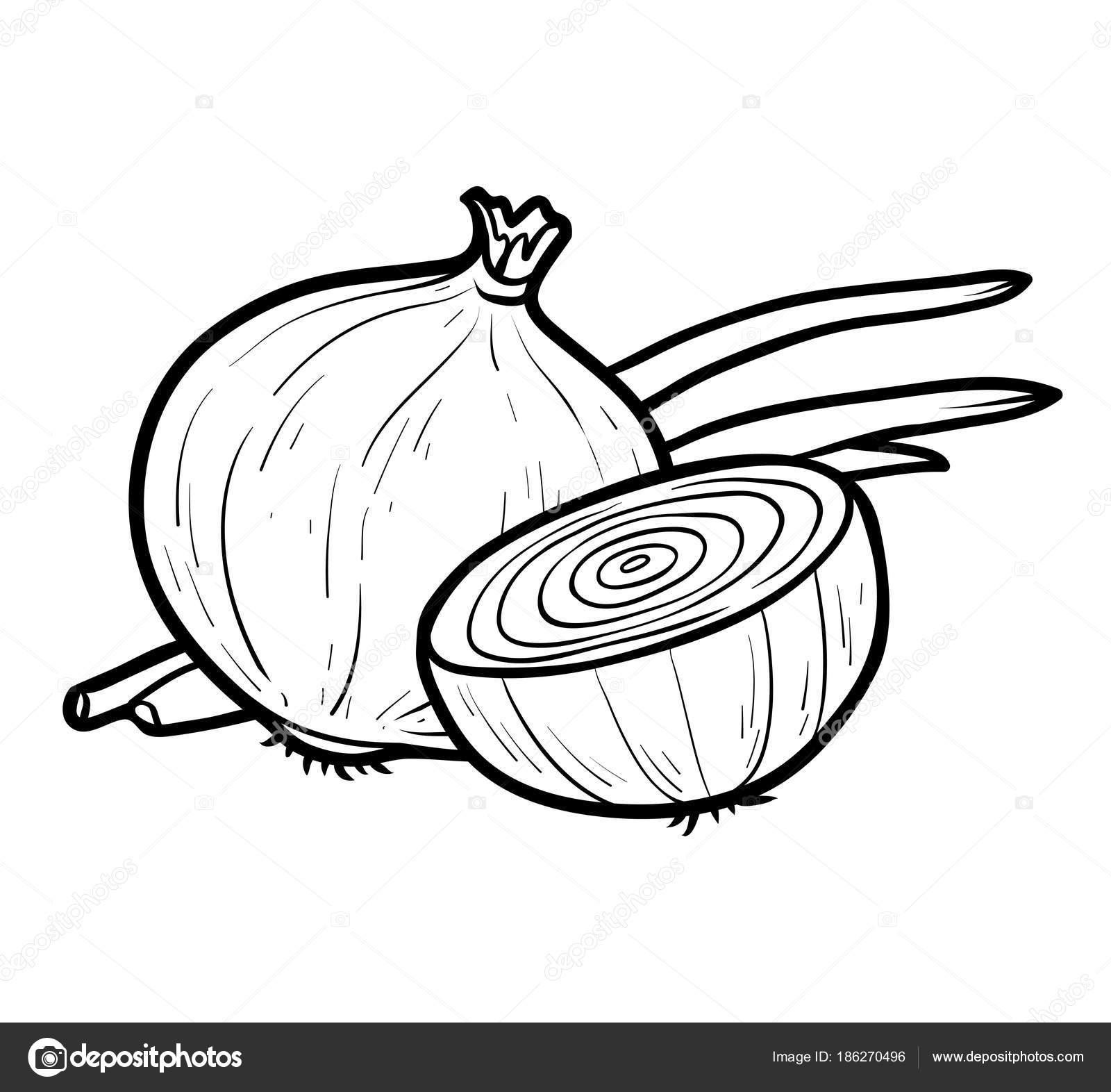 Boyama Kitabı Beyaz Soğan Stok Vektör Ksenyasavva 186270496