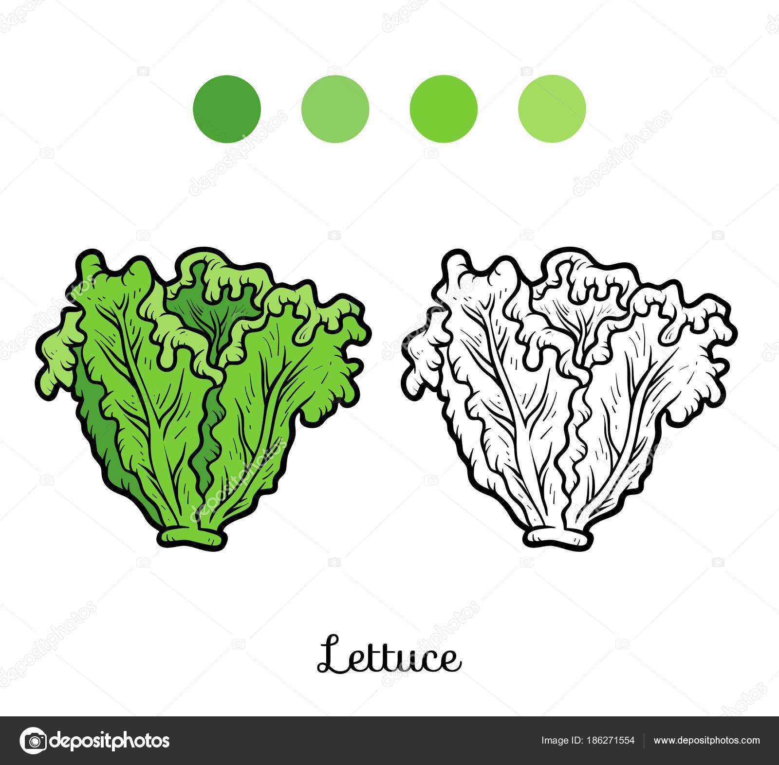 Coloring book, Lettuce — Stock Vector © ksenya_savva #186271554