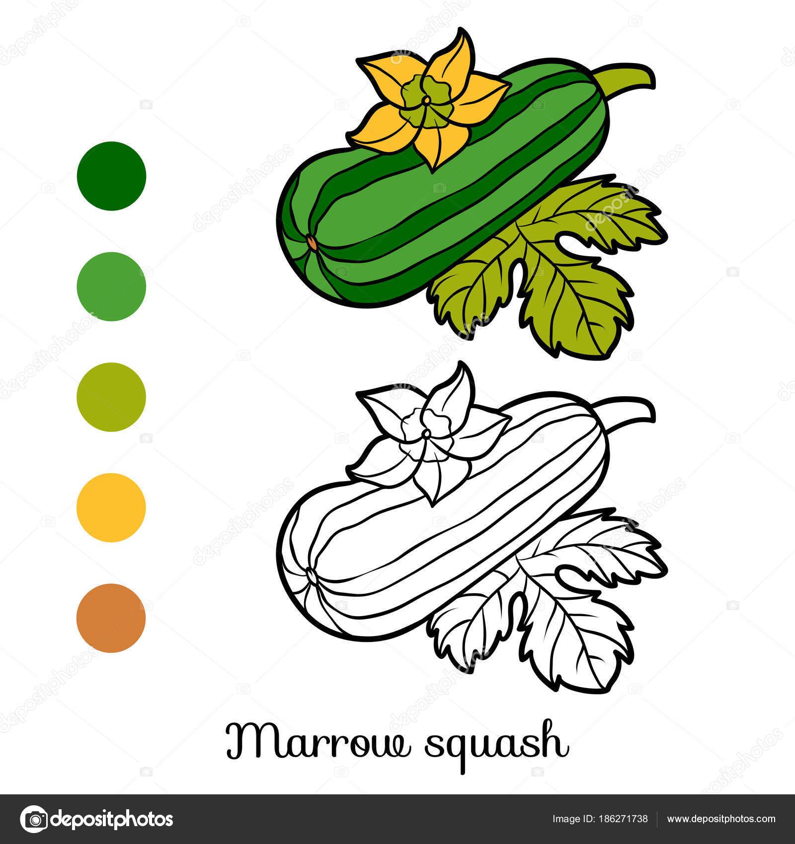 Coloring book, Marrow squash — Stock Vector © ksenya_savva #186271738