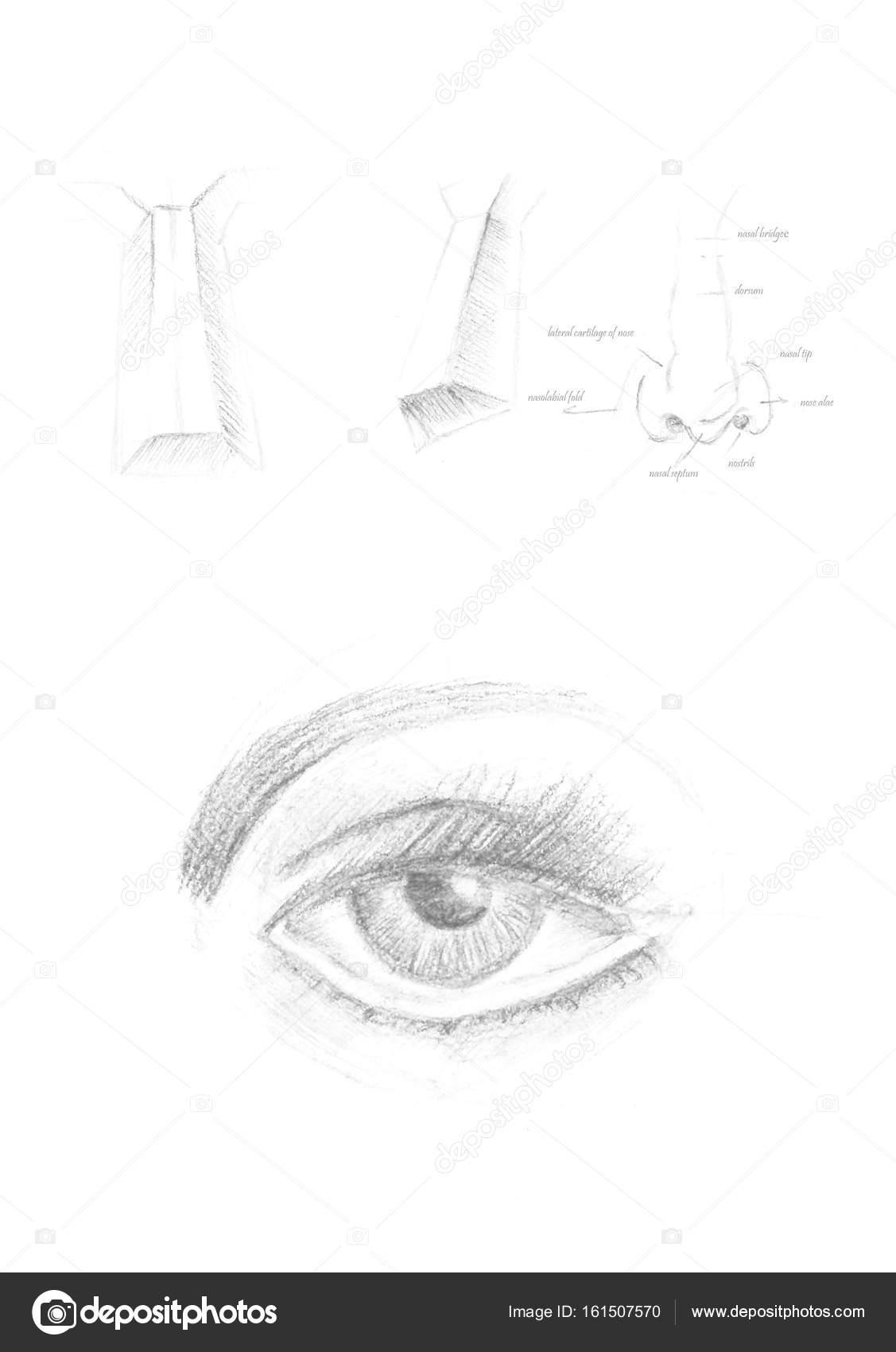 El çekilmiş Insan Göz Ve Burun Simge Tasarlamak Gri çizim Fırça