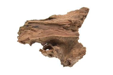 Driftwood or aged wood isolated on white background with clipping path. Piece of driftwood driftwood close up for aquarium.