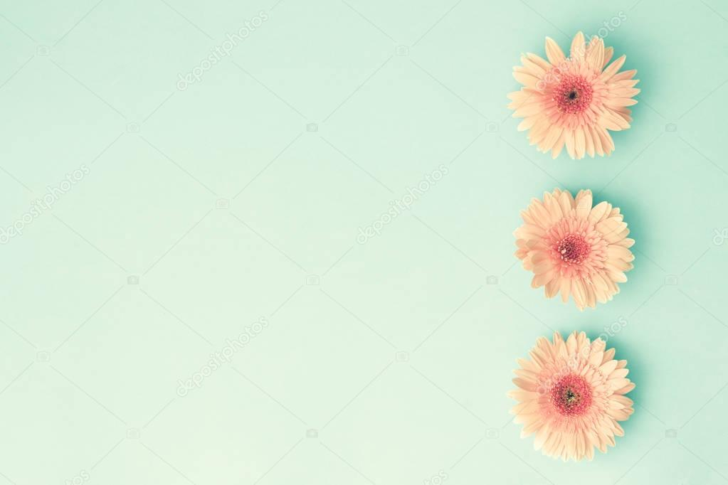Three Pink Daisies