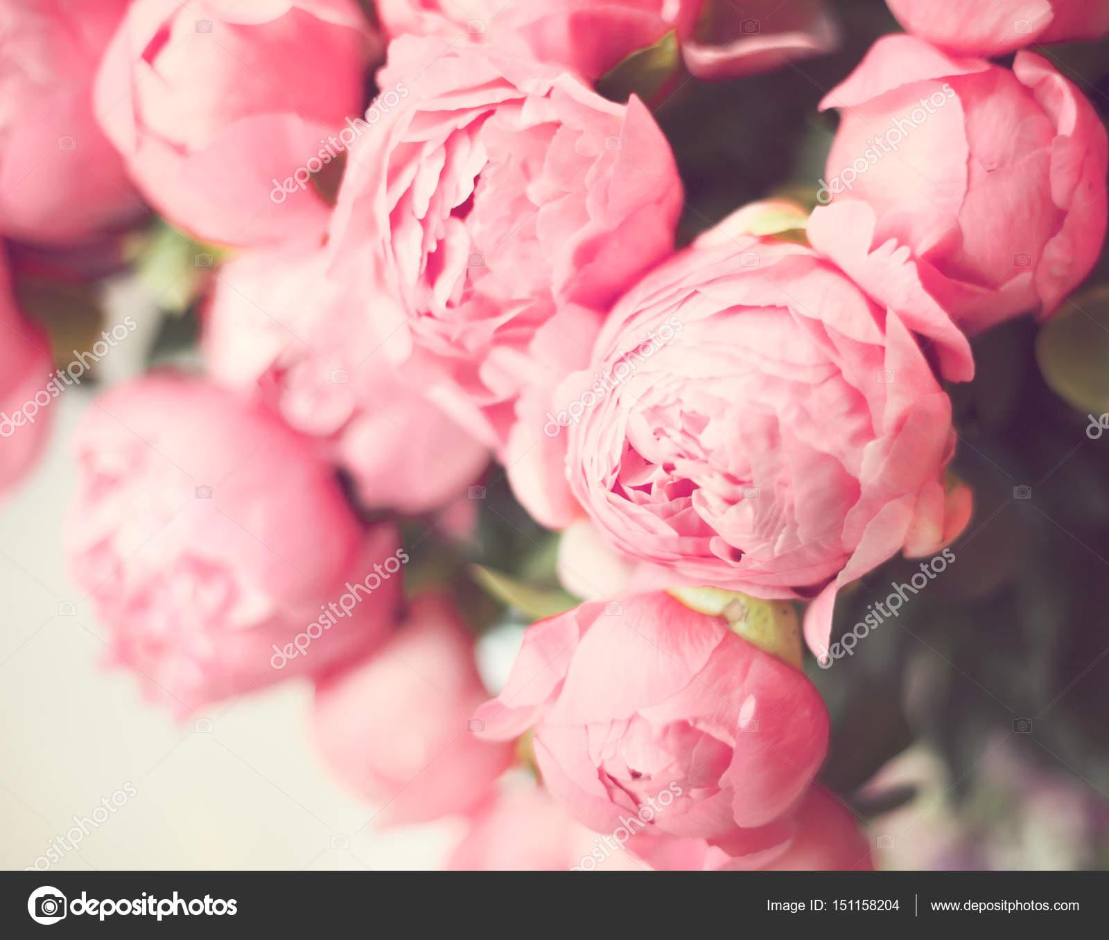 Vintage Rosa Pfingstrosen Stockfoto C Andrekaphoto 151158204