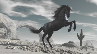 Horse rising  in the middle of a desert