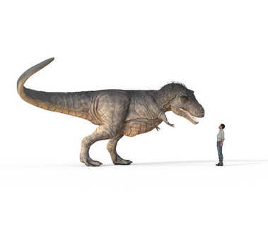 Man face to face with trex white