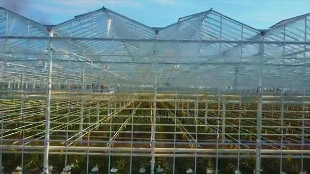 Letecké video skleníků