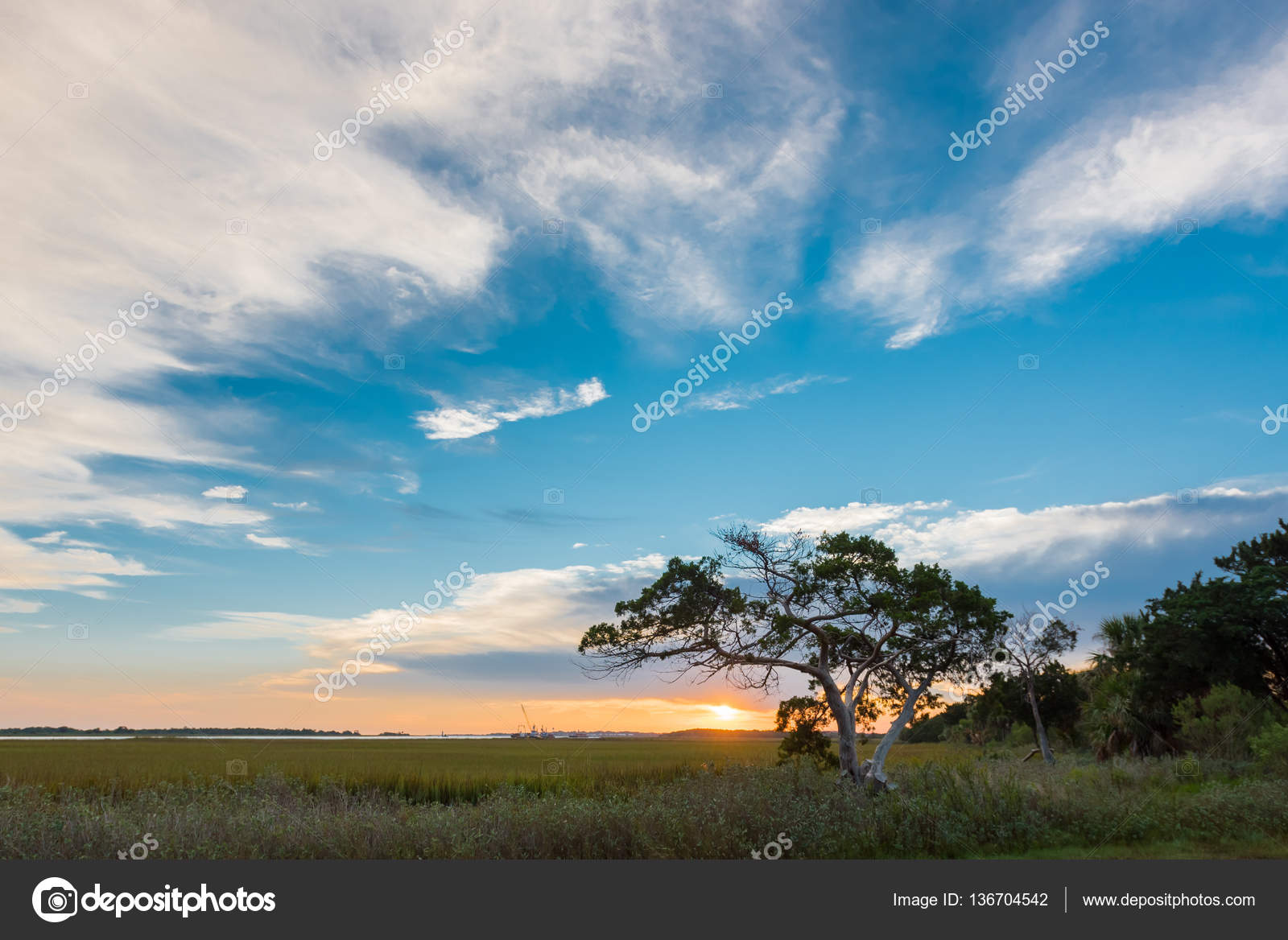 айленд дерево фото