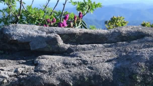 4 k sklopení dolů rocku a Rhododendron na na Blaze na Jane plešatý v Roan Mountain Vysočiny