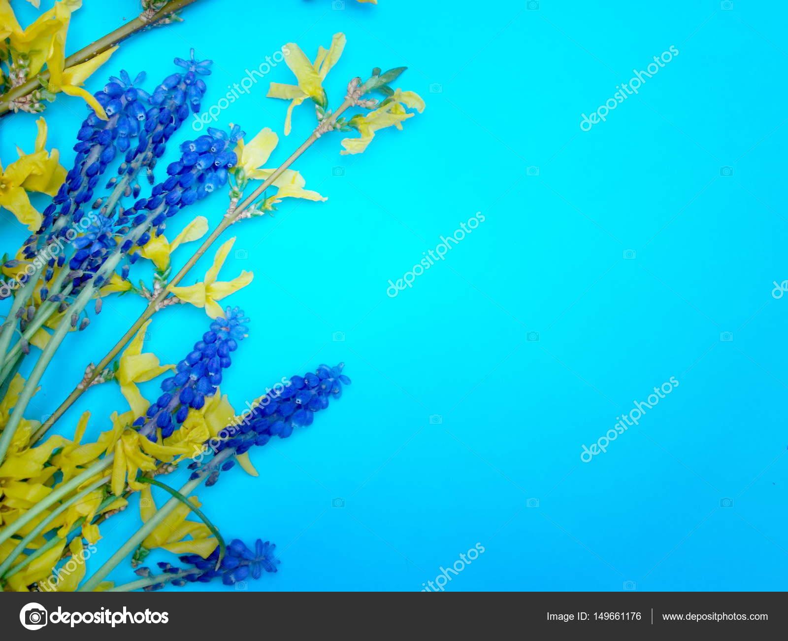 Fiori Su Sfondo Blu Foto Stock Sidliks 149661176